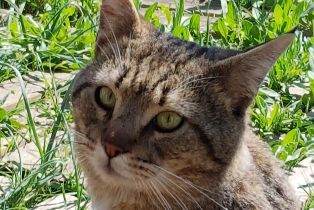 Discovery alert Cat Male , 2 years Aix-en-Provence France