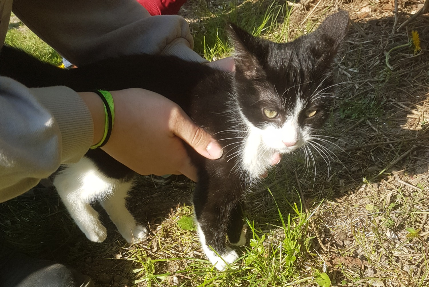 Discovery alert Cat Unknown , Between 1 and 3 months Morsang-sur-Orge France
