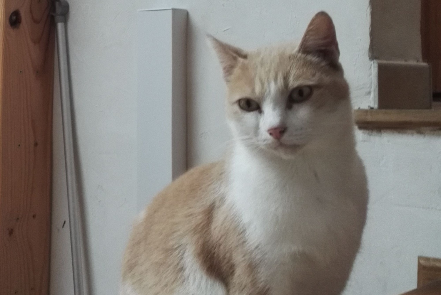 Disappearance alert Cat Male , 8 years Nice France