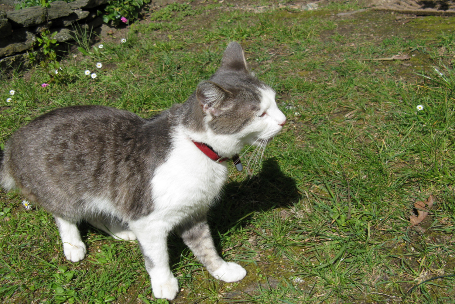 Discovery alert Cat Male , Between 9 and 12 months Carentoir France