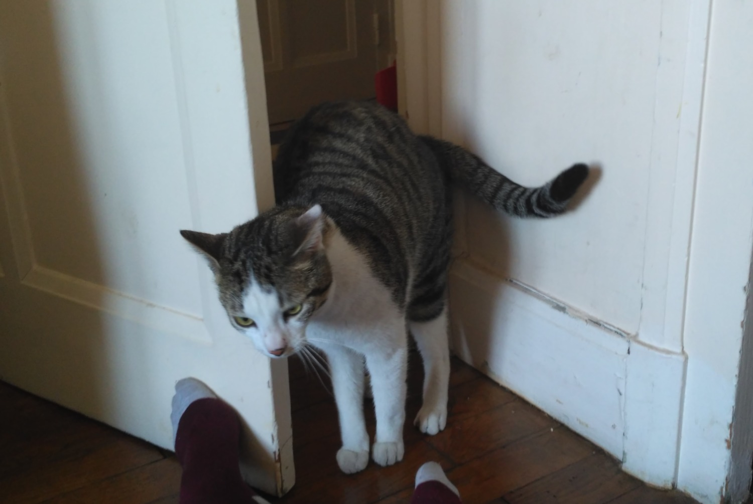 Discovery alert Cat Female , 3 years Lyon 3e Arrondissement France