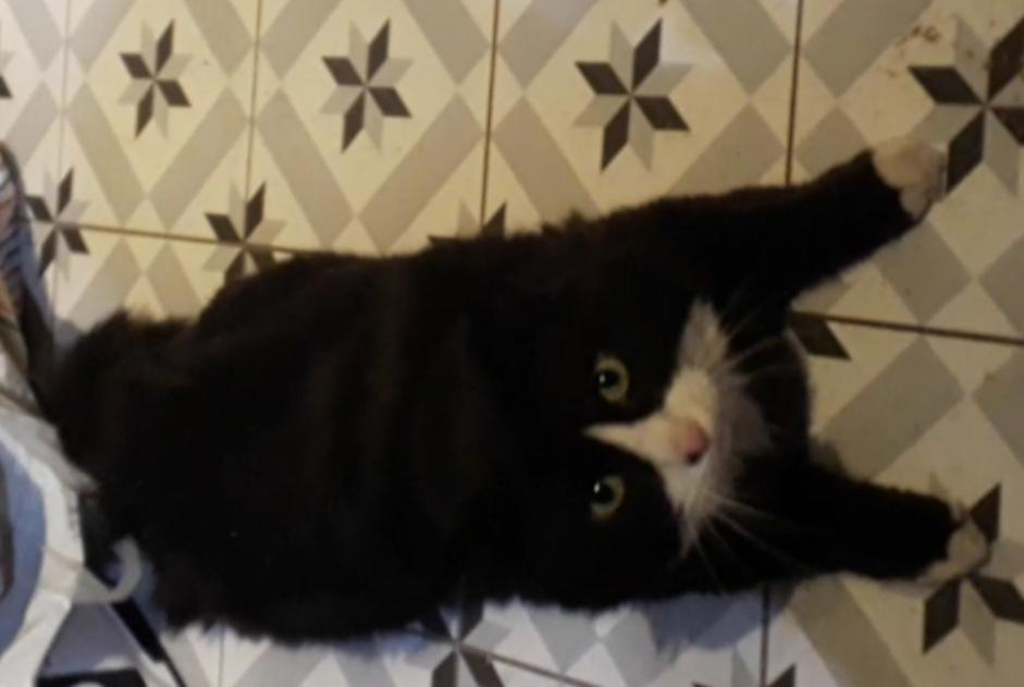 Disappearance alert Cat Male , 5 years Châtenay-Malabry France
