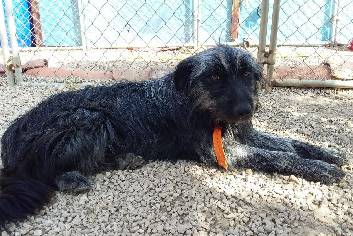 Discovery alert Dog miscegenation Male , 4 years Saint-Vallier-de-Thiey France