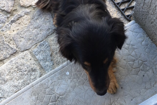 Discovery alert Dog Unknown , Between 4 and 6 months Bécon-les-Granits France
