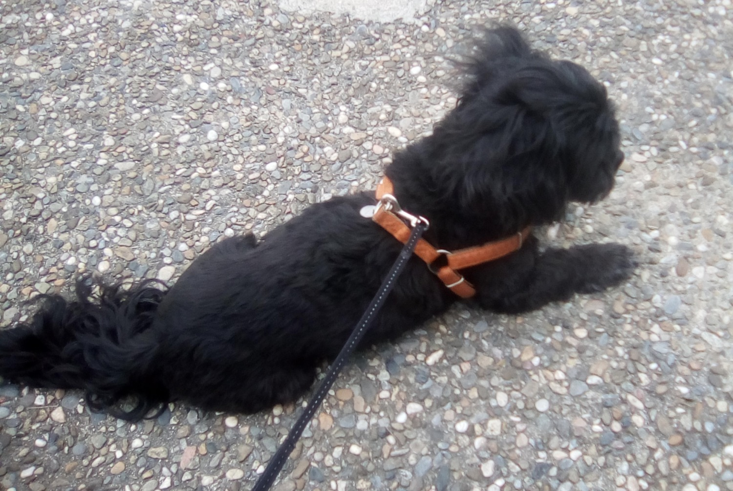 Discovery alert Dog Male , 3 years Laroque-d'Olmes France