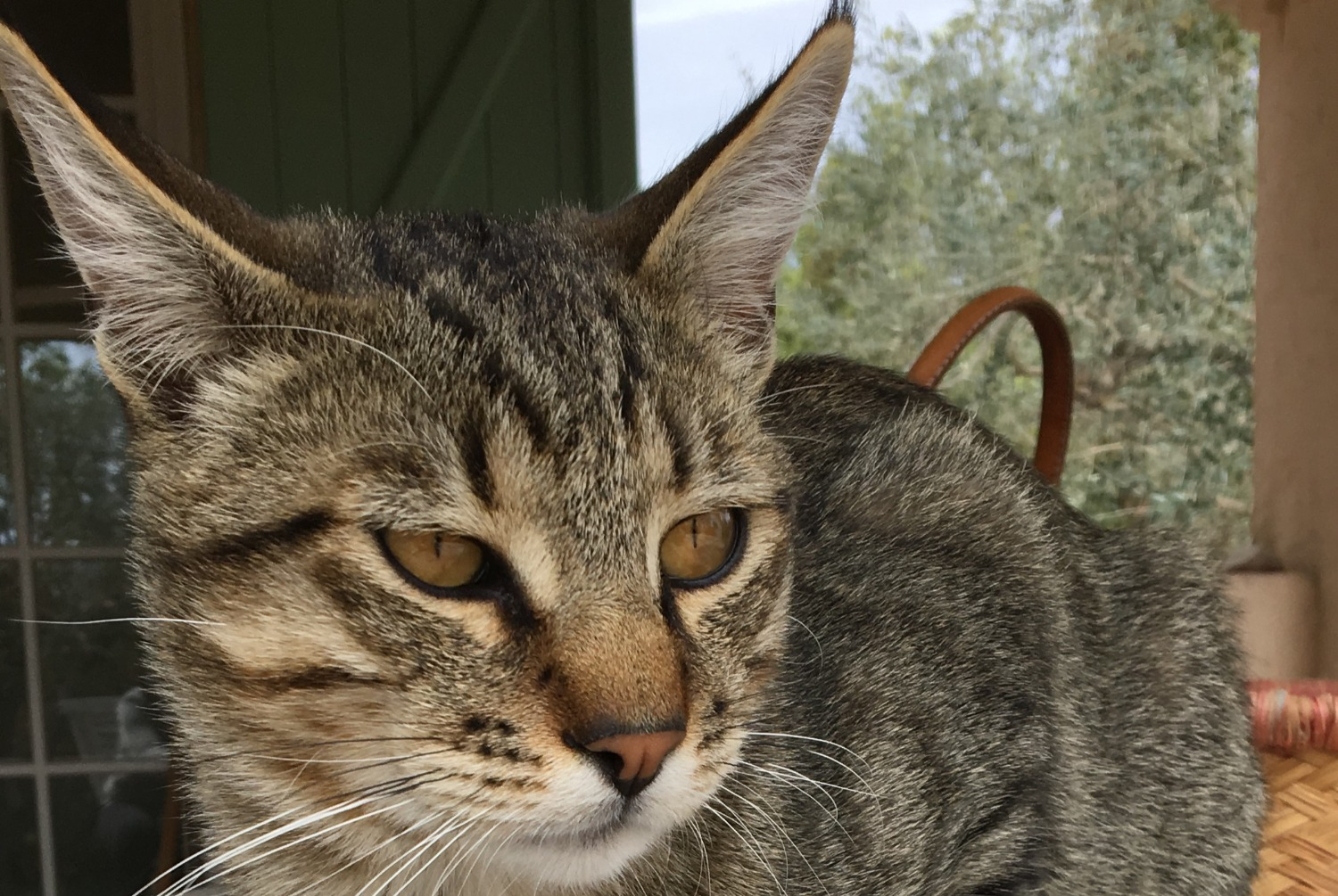 Discovery alert Cat Male , Between 9 and 12 months Le Rouret France