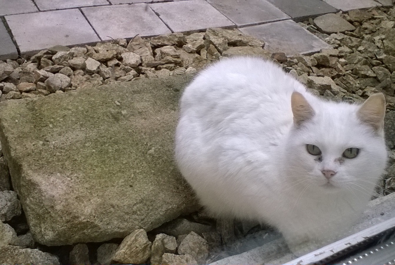Discovery alert Cat Unknown , 2 years Vals-les-Bains France