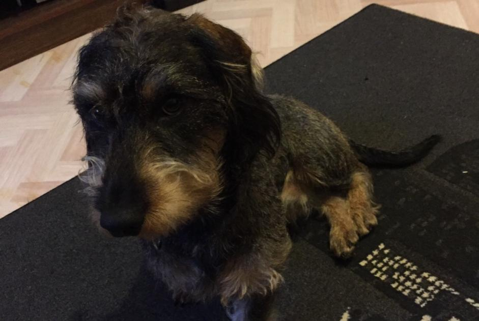 Disappearance alert Dog  Male , 1 years Écouflant France