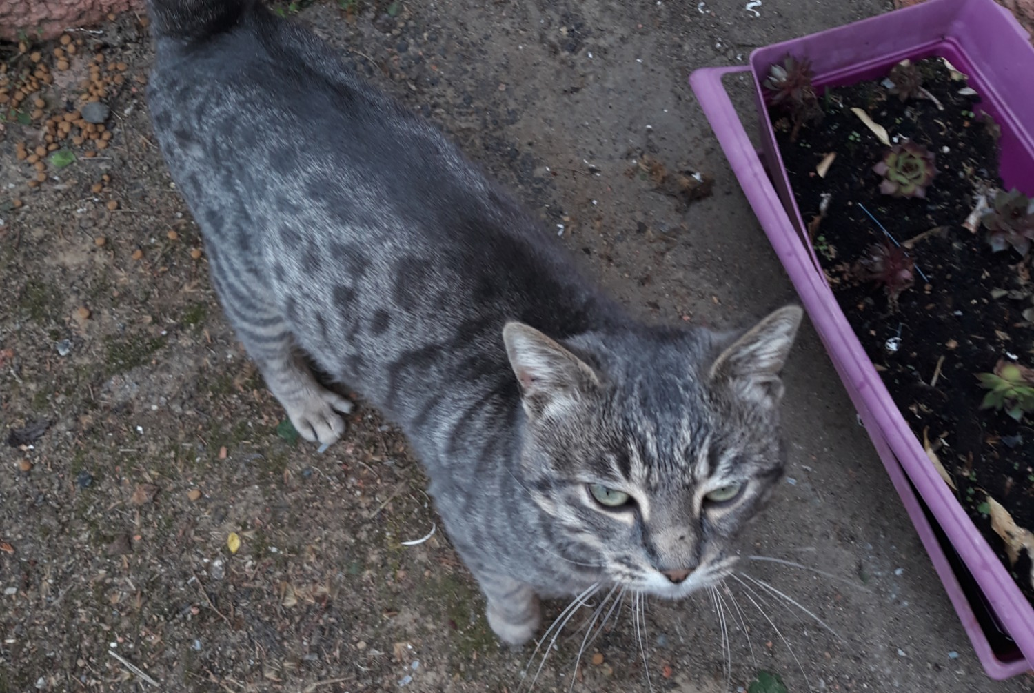Discovery alert Cat Male , 2 years Vienne France