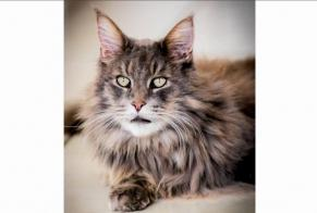Disappearance alert Cat  Male , 8 years Lagarde-Enval France