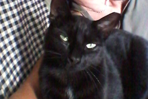 Disappearance alert Cat Male , 2 years Chauzon France
