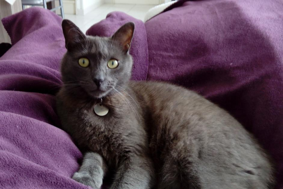 Disappearance alert Cat  Male , 6 years Saint-Saviol France
