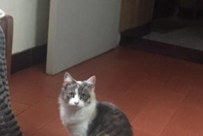 Disappearance alert Cat Female , 1 years Teyssode France