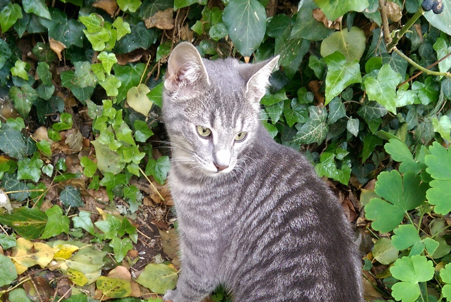 Discovery alert Cat Female , Between 7 and 9 months Besançon France