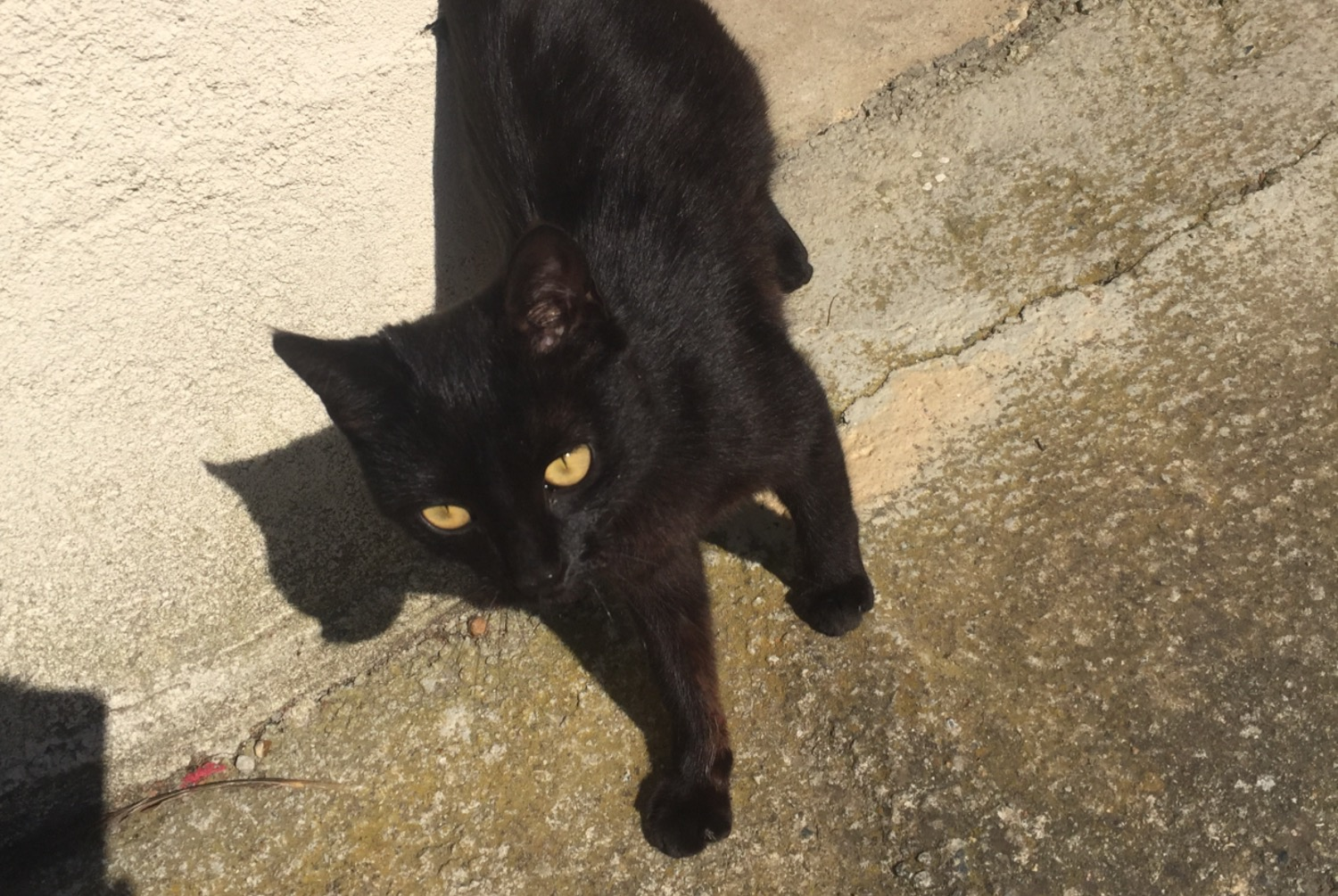 Discovery alert Cat Female , Between 4 and 6 months Saumur France