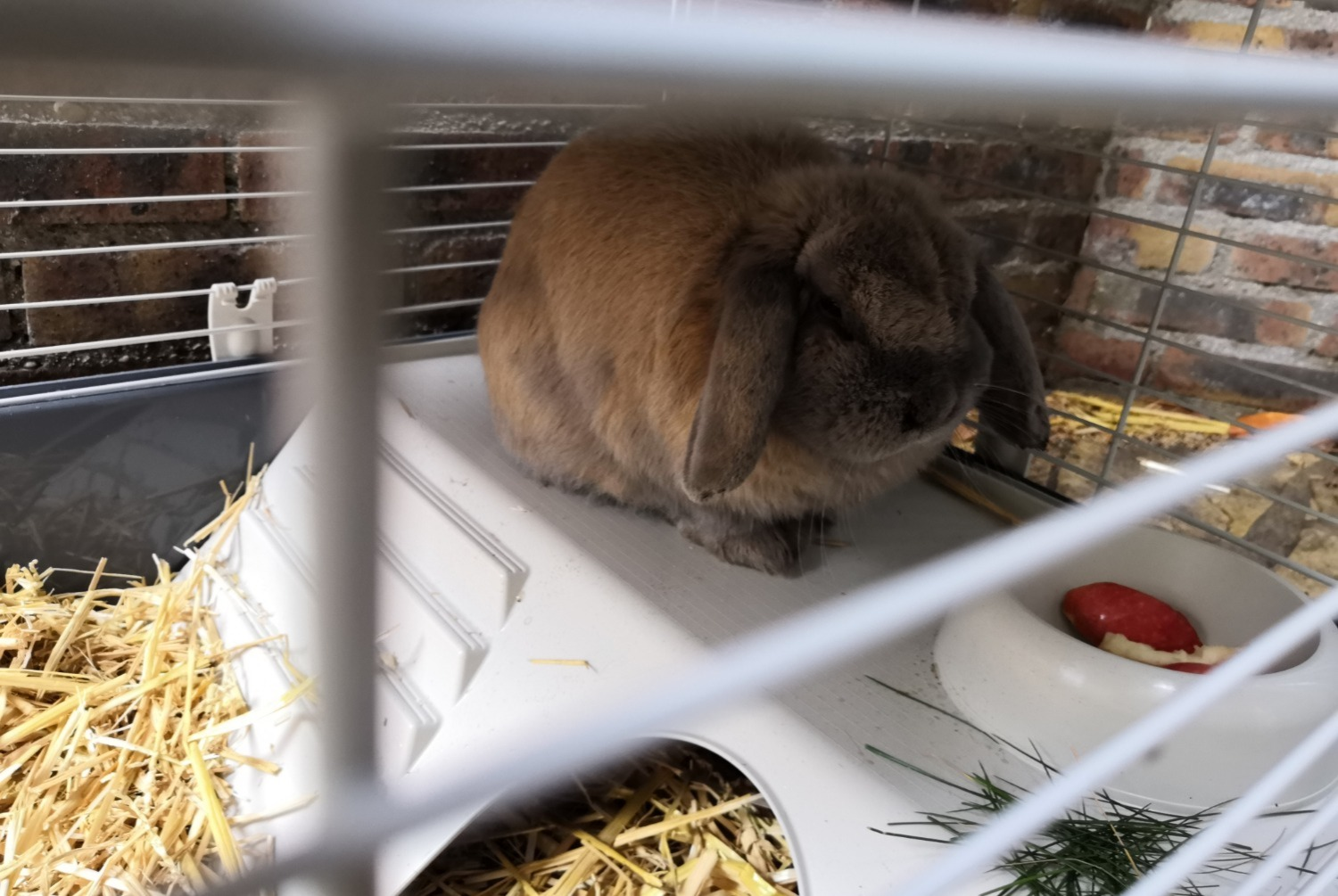 Discovery alert Rabbit Unknown Champigny-sur-Marne France