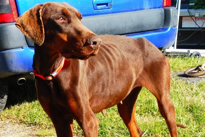 Discovery alert Dog  Female , 4 years Bourg-et-Comin France