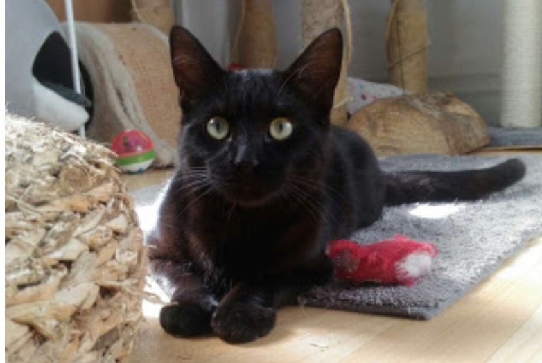 Disappearance alert Cat miscegenation Male , 0 years Chaville France