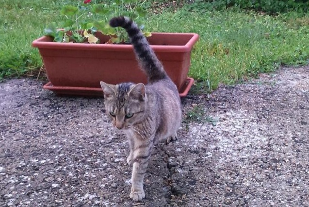Discovery alert Cat Female , 1 year Châtellerault France