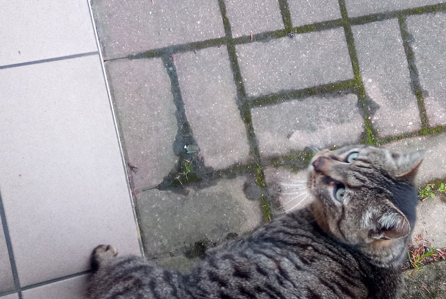 Discovery alert Cat  Unknown , 1 year Brezolles France