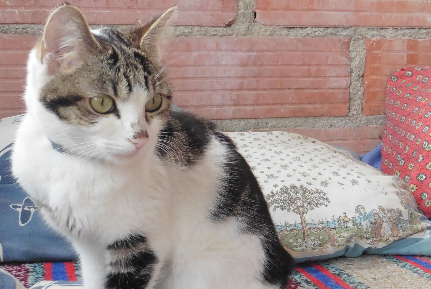 Discovery alert Cat Female , Between 9 and 12 months Damiatte France