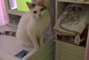 Disappearance alert Cat  Female , 8 years Poiseux France