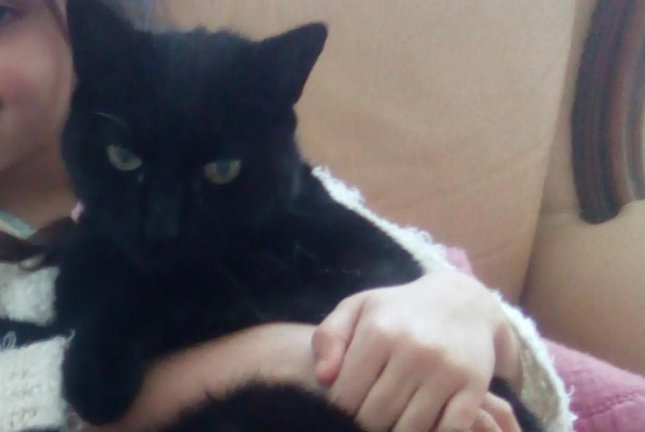 Disappearance alert Cat  Male , 14 years Saint-Sever France