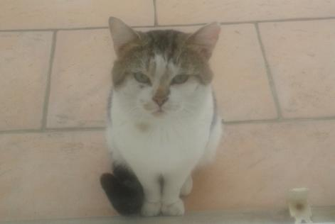 Discovery alert Cat Male , 2 years Cherbourg-en-Cotentin France