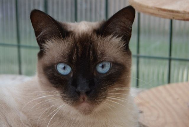 Disappearance alert Cat miscegenation Female , 6 years Thiberville France
