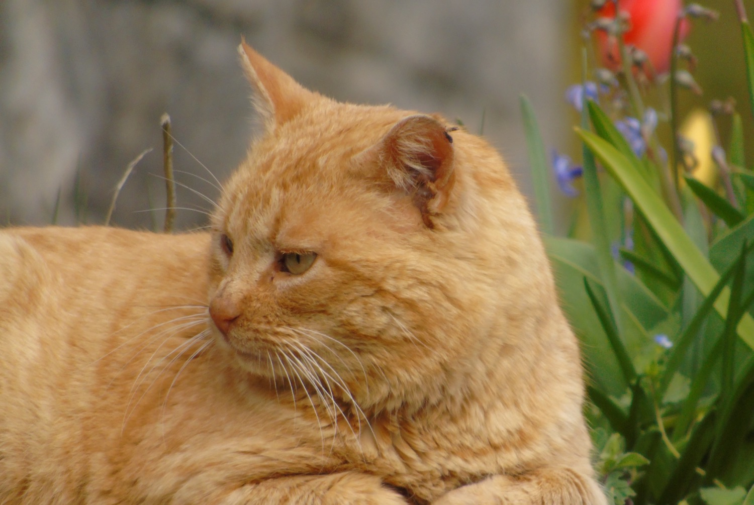 Discovery alert Cat  Male , 6 years Lods France