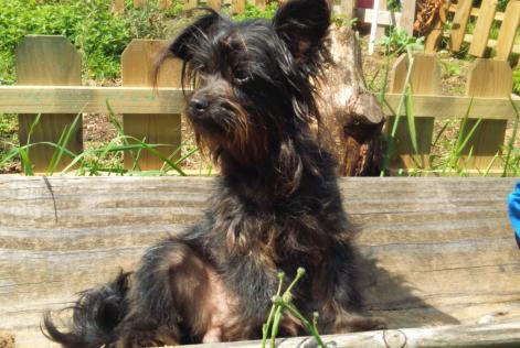 Discovery alert Dog Female , 1 year Locoal-Mendon France