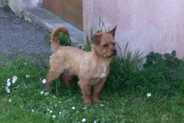 Discovery alert Dog Male , 2 years Tourlaville  France