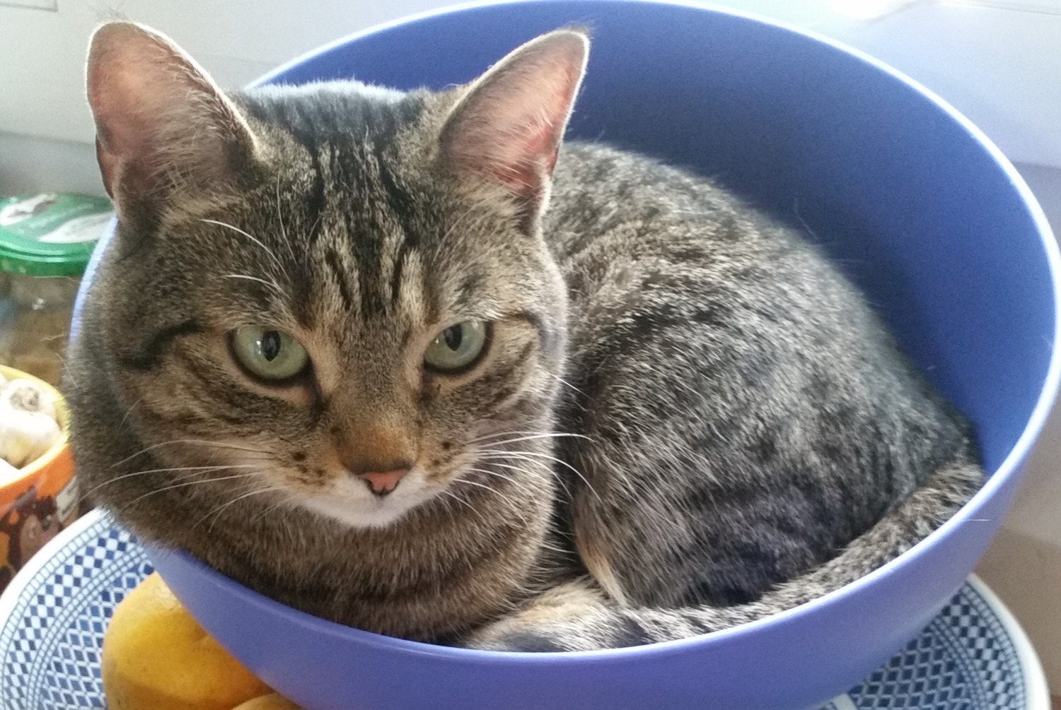 Disappearance alert Cat Female , 4 years Saint-Denis France