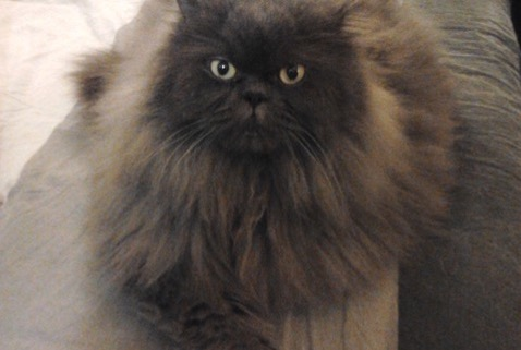 Disappearance alert Cat  Male , 14 years Alfortville France