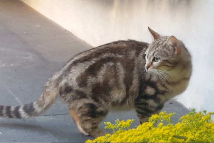 Discovery alert Cat Female , 1 year Rueil-Malmaison France
