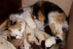 Disappearance alert Cat Female , 1 years Belfort France