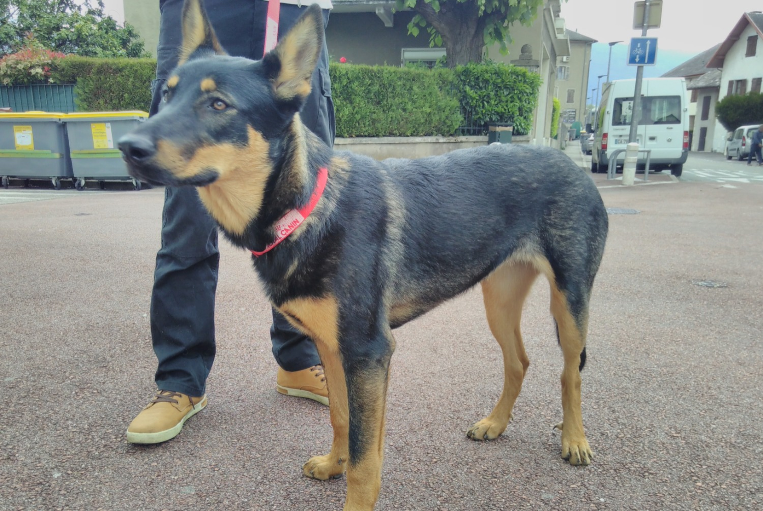Discovery alert Dog  Female , 1 year Chambéry France