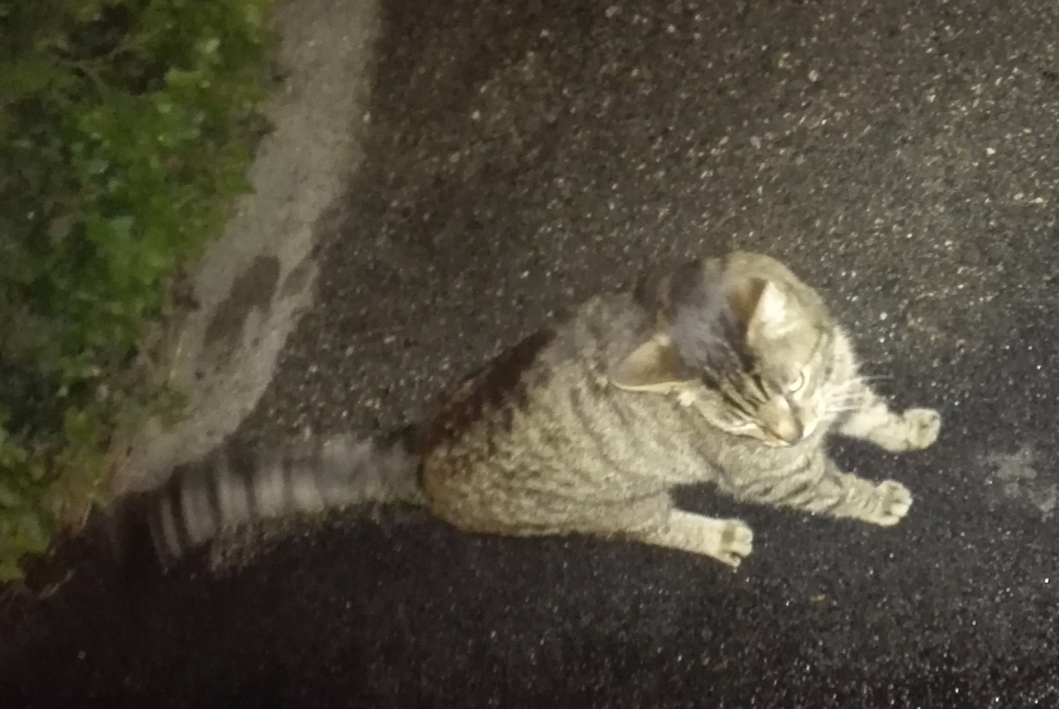Discovery alert Cat Unknown , 7 years Annecy France