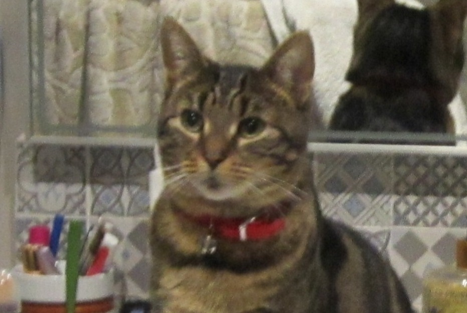 Disappearance alert Cat miscegenation Female , 3 years Cabris France