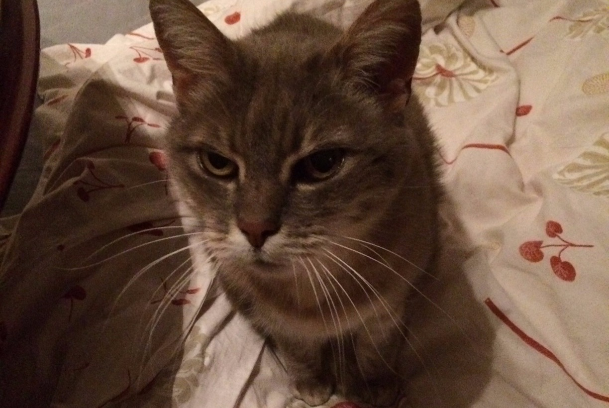 Disappearance alert Cat Female , 18 years Essert France