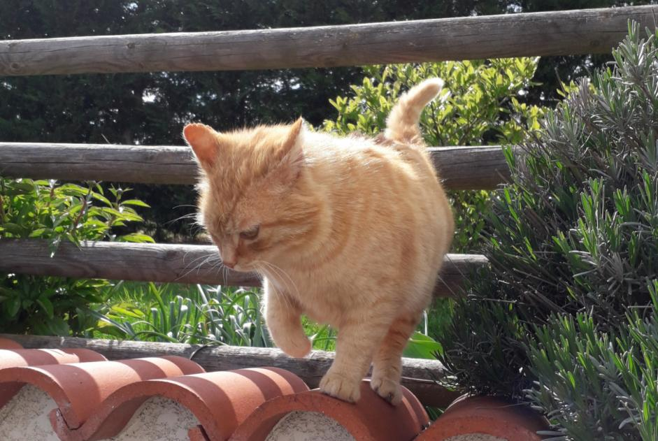 Discovery alert Cat Male , 4 years Saint-Paul-de-Vézelin France