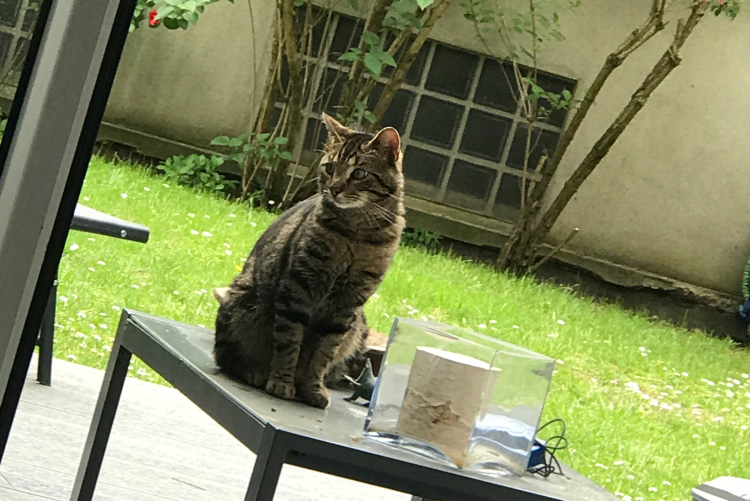 Discovery alert Cat  Male , 2 years Bry-sur-Marne France