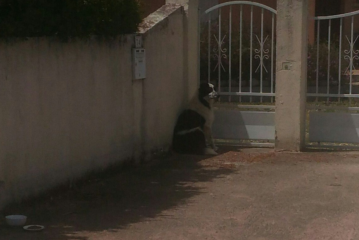 Discovery alert Dog Unknown , 7 years Ventiseri France