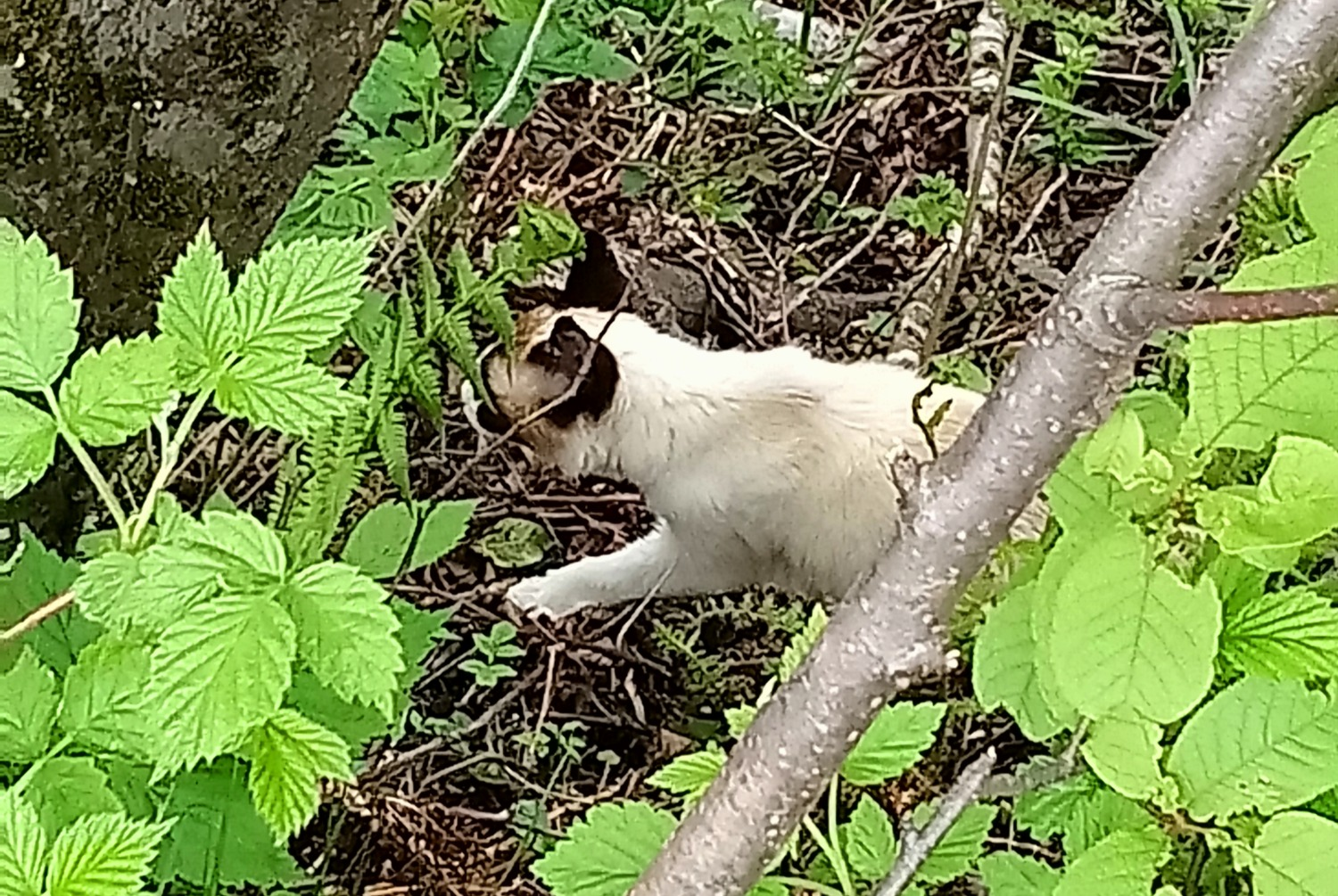Discovery alert Cat Unknown , 1 year Chamonix-Mont-Blanc France