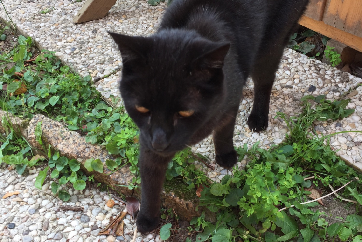 Discovery alert Cat Unknown , 1 year Nantes France