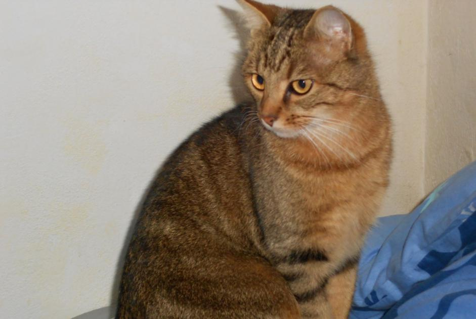 Disappearance alert Cat Male , 8 years Rosny-sous-Bois France