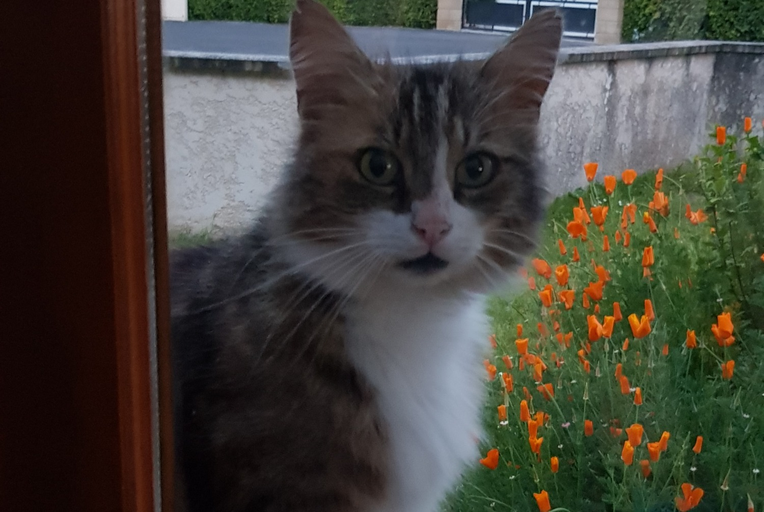 Discovery alert Cat Unknown , 2 years Guignicourt France