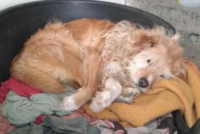 Disappearance alert Dog miscegenation Male , 17 years Bazillac France