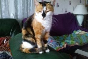 Disappearance alert Cat Female , 11 years GIROMAGNY France