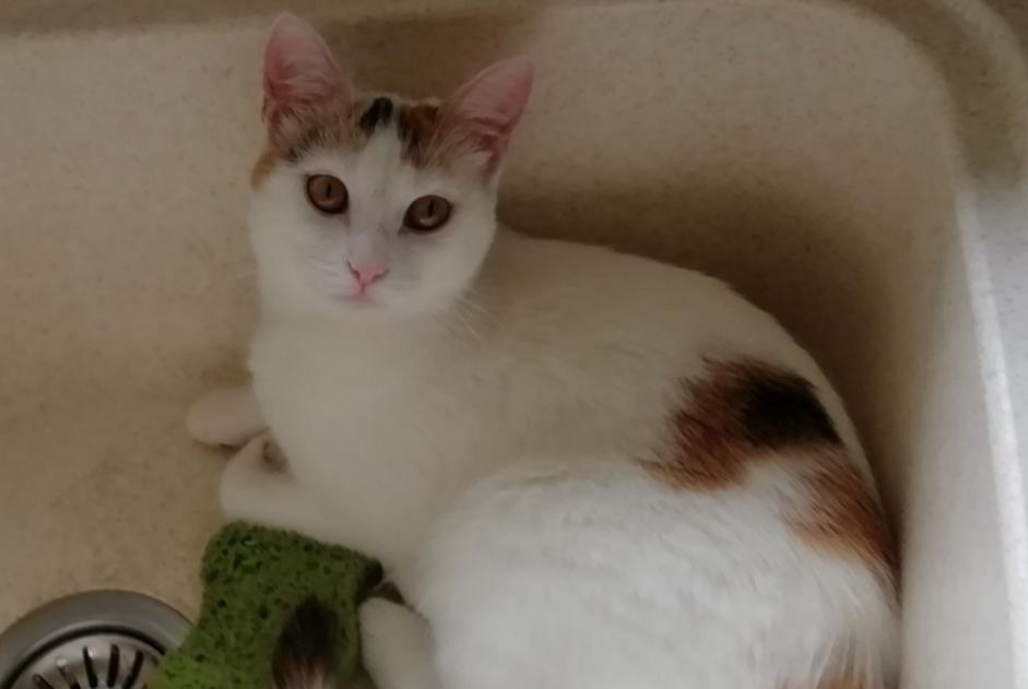 Disappearance alert Cat Female , 1 years Ceyssat France